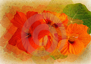 Floral Picture With Patina Texture Stock Image - Image: 14520271