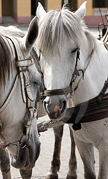 Horses Portrait Stock Photography - Image: 14526882