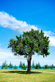 Single Tree On Green Grass With Blue Sky Stock Image - Image: 14528901