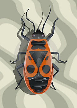 Red Soldier Bug Stock Photos - Image: 14530153