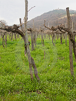Winter Vines Stock Image - Image: 14535091