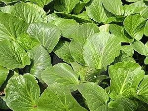 Green Foliage Royalty Free Stock Photography - Image: 14535347