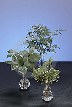Plants Grow Stock Image - Image: 14535841