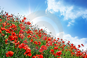 Poppies Hill Stock Photography - Image: 14535962