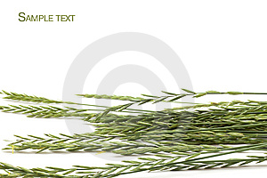 Frame Of Grass Royalty Free Stock Photos - Image: 14540378