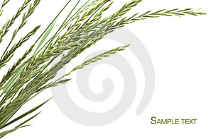 Frame Of Grass Stock Photography - Image: 14540382