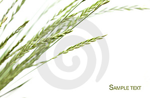 Frame Of Grass Royalty Free Stock Image - Image: 14540386