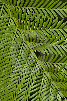 Fern Leaf Filling The Frame Stock Photos - Image: 14543713