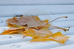 Frozen Maple Leafes Stock Image - Image: 14544751