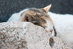 Cat Royalty Free Stock Images - Image: 14545579