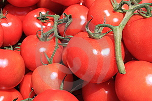 Ripe Red Cherry Tomatoes Stock Images - Image: 14547354