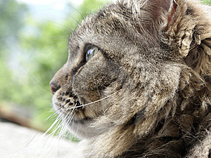 Cat Royalty Free Stock Images - Image: 14548169