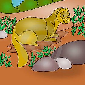 Ferret Animated Stock Images - Image: 14548714