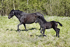 Baby Horse Royalty Free Stock Photo - Image: 14554515