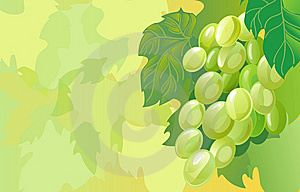 Grapes Cluster Royalty Free Stock Photography - Image: 14555477