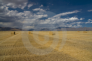 Idaho Harvest Stock Image - Image: 14559401