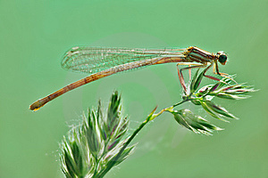 Dragonfly Resting On A Plant Royalty Free Stock Images - Image: 14560999