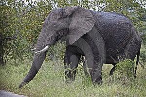 Elephant Stock Photo - Image: 14568580