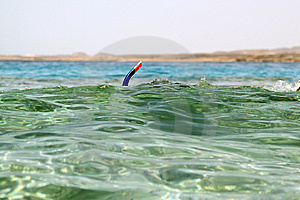 Snorkeling In Red Sea Royalty Free Stock Images - Image: 14570449