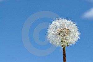 Dandelion Seeds Stock Photos - Image: 14573623