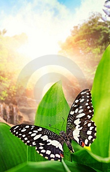 Butterfly Over Waterfall In Wild Forest Stock Photo - Image: 14576660