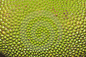 Jack Fruit Stock Photography - Image: 14584852