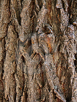 Bark  Tree  Oak Stock Image - Image: 14586921
