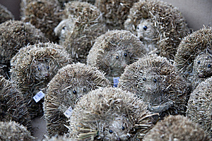 Cute Hedgehog Souvenirs Stock Photo - Image: 14588470