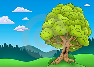 Big Leafy Tree In Landscape Stock Photos - Image: 14589283