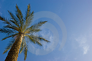 Palm Royalty Free Stock Photography - Image: 14594777