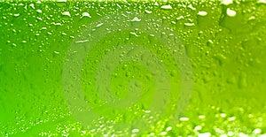 Wet Beer Bottle Stock Image - Image: 14596401