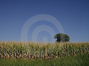 Field And Sky Stock Photography - Image: 14597122