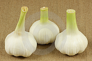 Fresh Garlic Stock Image - Image: 14606431