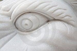 White Lion Eye Royalty Free Stock Photo - Image: 14606755