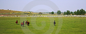 Stud Farm Royalty Free Stock Photography - Image: 14631227