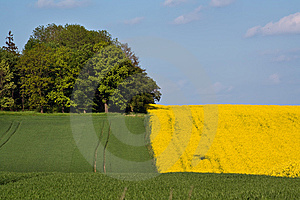 Landscape With Coloured Surfaces Fields Royalty Free Stock Photo - Image: 14631735