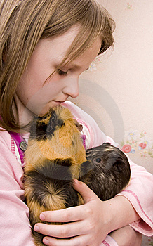 Little Girl And Her Guinea Pigs Stock Image - Image: 14631981
