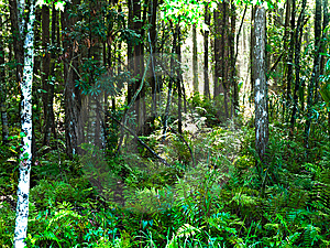 Bosque HDR Horizontal Fotos de archivo - Imagen: 14632843