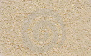 The Egyptian Camolino Rice Royalty Free Stock Photography - Image: 14634387
