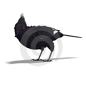 Bird Phainopepla. 3D Rendering With Clipping Path Royalty Free Stock Images - Image: 14638929