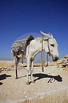 Donkey Under Brilliant Blue Sky Stock Photo - Image: 14644500