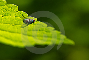 Fly Under Leaf Royalty Free Stock Photo - Image: 14645485