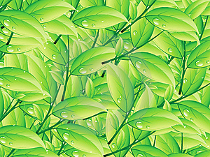 Green Foliage Royalty Free Stock Photography - Image: 14645837
