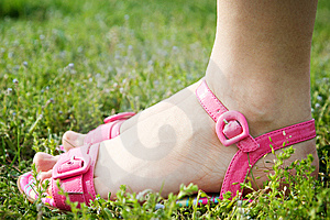 Female Feet In Pink Sandals Royalty Free Stock Image - Image: 14647306
