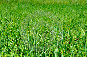 Grass Stock Image - Image: 14648811