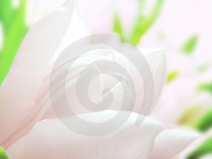 Pink Tulip Royalty Free Stock Photography - Image: 14649377