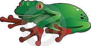 Treefrog_1 Stock Image - Image: 14650021