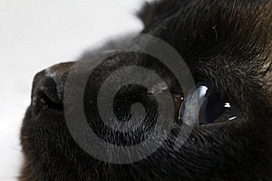 Sight The Cat Royalty Free Stock Photos - Image: 14652598