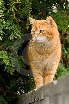 Garfield Royalty Free Stock Photography - Image: 14655987