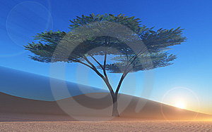 Baum In Der Wüste Royalty Free Stock Images - Image: 14656099